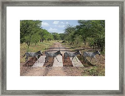 African Zebra Crossing Framed Print by Gill Billington
