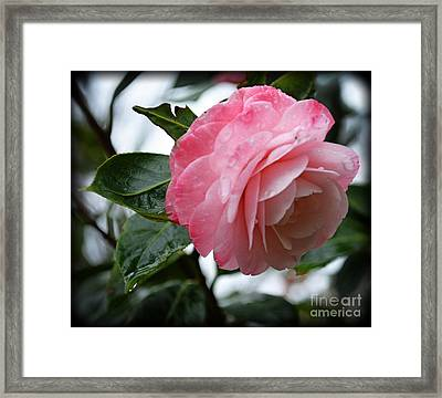After A March Rain Framed Print by Eva Thomas