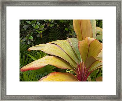 Framed Print featuring the photograph After A Morning Rain by Michael Flood