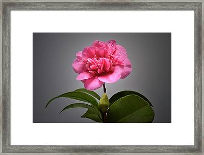 After A Rain Shower. Framed Print by Terence Davis