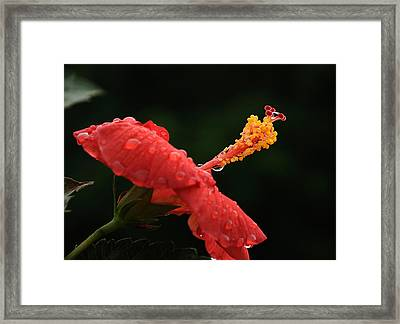 After A Shower Framed Print