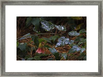After Rain. Souvenir De Bonn. Framed Print by Viktor Savchenko
