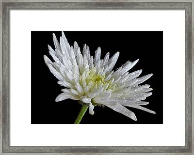 After Rain Framed Print by Svetlana Sewell