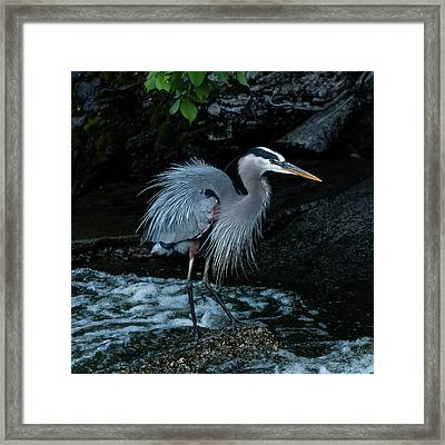 After The Bath Framed Print by Bruce Danz