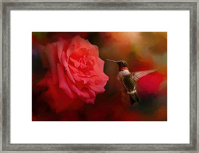After The Big Rose Framed Print