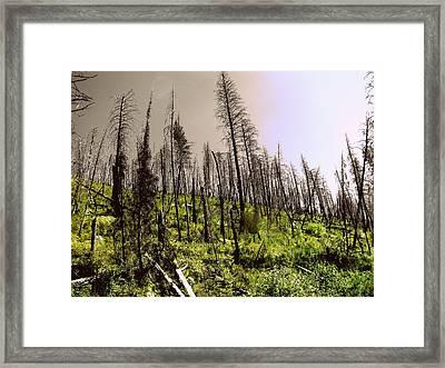 After The Burn Framed Print