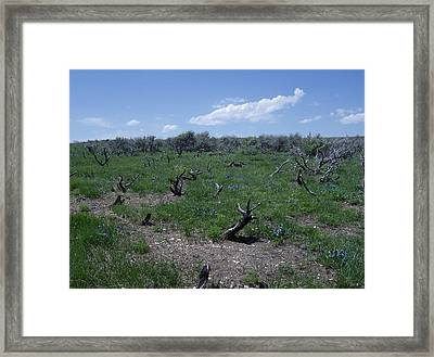 After The Fire Framed Print by Susan Pedrini