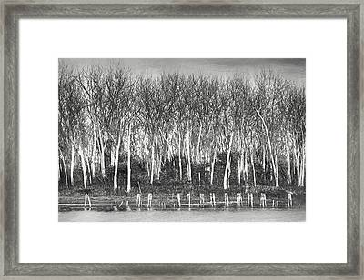 After The Flood - Black And White Framed Print by Nikolyn McDonald