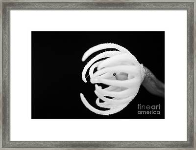 After The Flower Framed Print by Cesar Marino