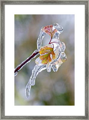 After The Ice Storm Framed Print