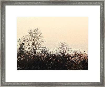After The Leaves Dbae Framed Print by Lyle Crump