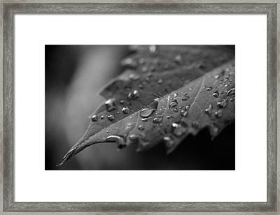 After The Morning Rain Framed Print by Jon Woodhams