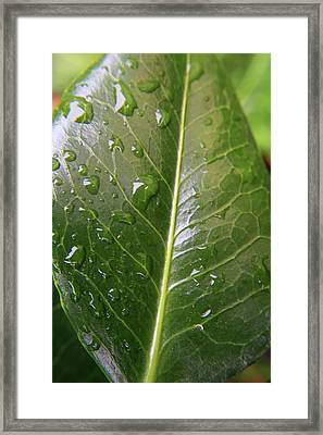 After The Rain Framed Print by Aidan Moran