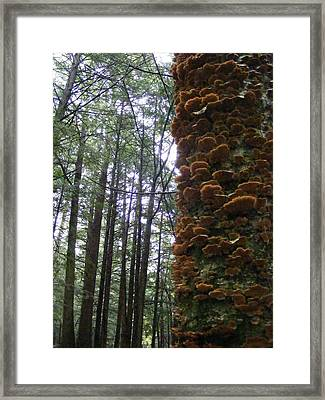 After The Rain Framed Print by Alison Heckard