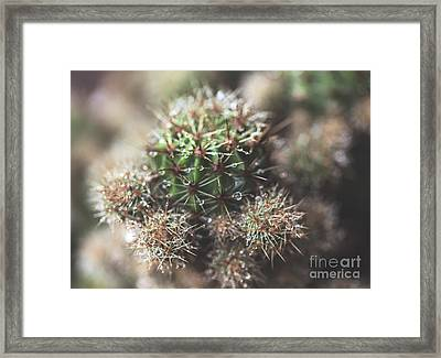 After The Rain Cactus Framed Print by Joan McCool