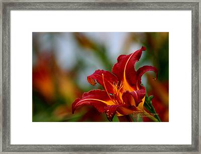 After The Rain Came The Flowers  Framed Print