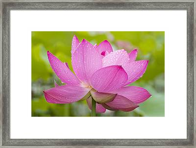 After The Rain Framed Print by Elvira Butler