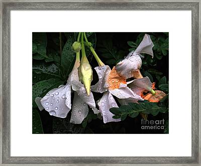 After The Rain - Flower Photography Framed Print by Miriam Danar