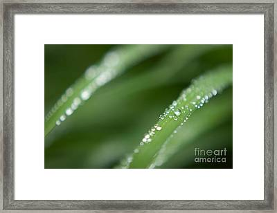 After The Rain Framed Print by Hideaki Sakurai