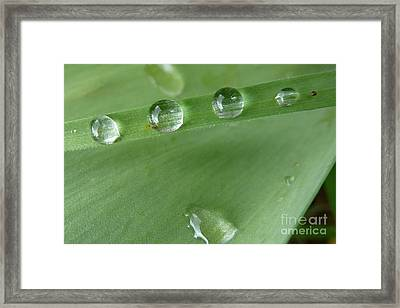Framed Print featuring the photograph After The Rain by Jean Bernard Roussilhe