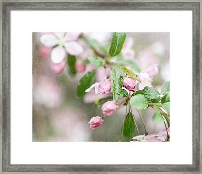 After The Rain Framed Print by Lisa Russo