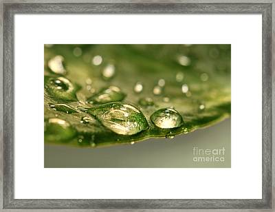 After The Rain Framed Print by Sandra Cunningham