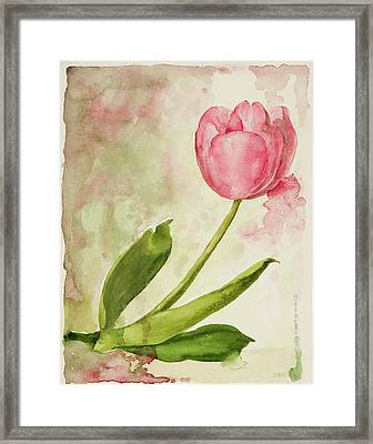 After The Rain  Tulip 2 Framed Print