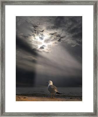 After The Storm Framed Print by Elizabeth Reynders