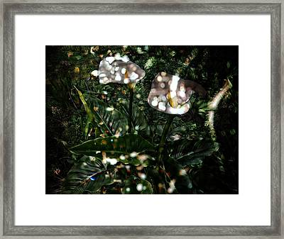 Afternoon Calla Lily Framed Print by Thom Zehrfeld