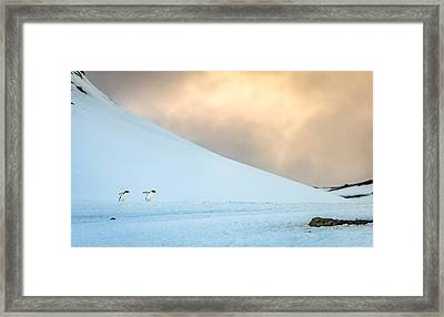 Afternoon Commute - Antarctica Penguin Photograph Framed Print