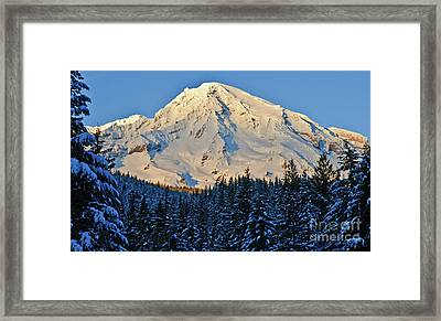 Afternoon Delight Framed Print