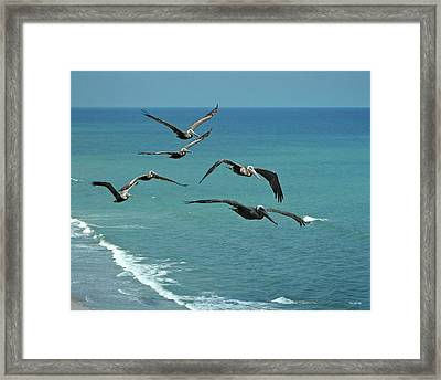 Afternoon Flight Framed Print by Frank Mari