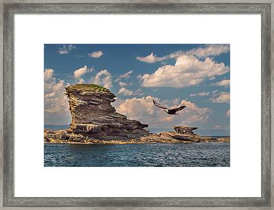 Afternoon Flight Framed Print by Tracy Munson