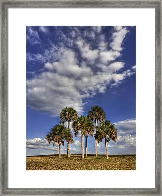 Afternoon High Framed Print