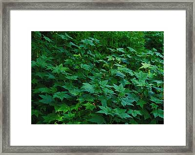 Framed Print featuring the photograph Afternoon Light by Marilynne Bull