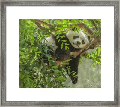 Afternoon Nap Baby Panda Framed Print