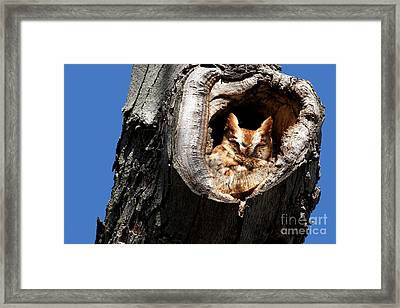 Afternoon Nap Framed Print by Heather King