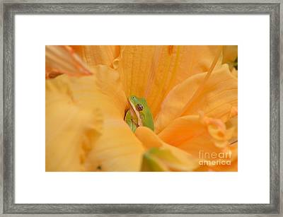 Afternoon Nap  Framed Print by Kathy Gibbons