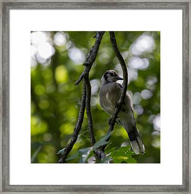 Afternoon Perch Framed Print by Brian Manfra