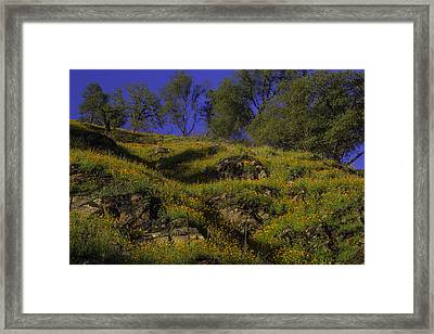 Afternoon Poppies Framed Print