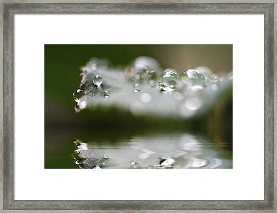 Afternoon Raindrops Framed Print