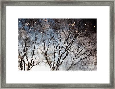 Afternoon Reflection II Framed Print by Derek Selander