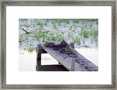 Framed Print featuring the photograph Afternoon Rest by Deborah  Crew-Johnson
