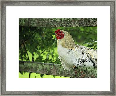 Afternoon Siesta Framed Print