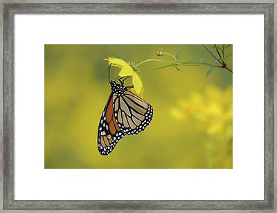 Framed Print featuring the photograph Afternoon Snack by Ann Bridges