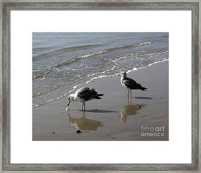 Afternoon Snack Framed Print