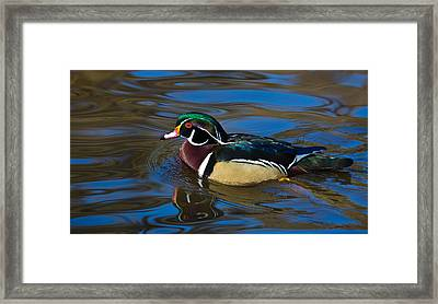 Afternoon Swim Framed Print by Randy Hall