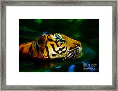Afternoon Swim - Tiger Framed Print