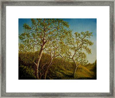 Afternoon Sycamores Framed Print by Lance Anderson