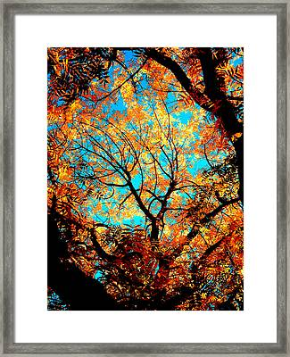 Afternoon Framed Print by Tim Tanis